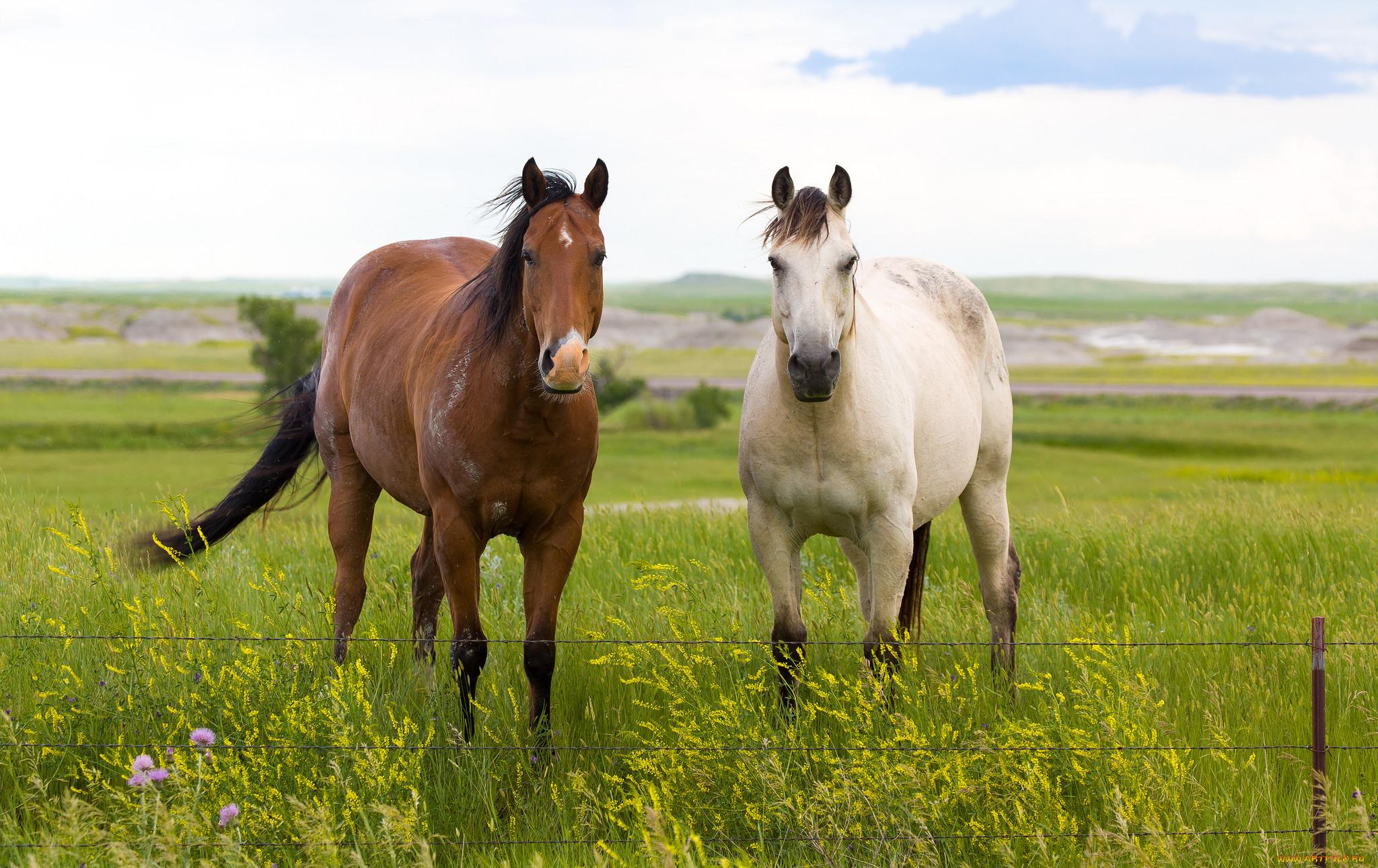 Лошади летом картинки на рабочий стол